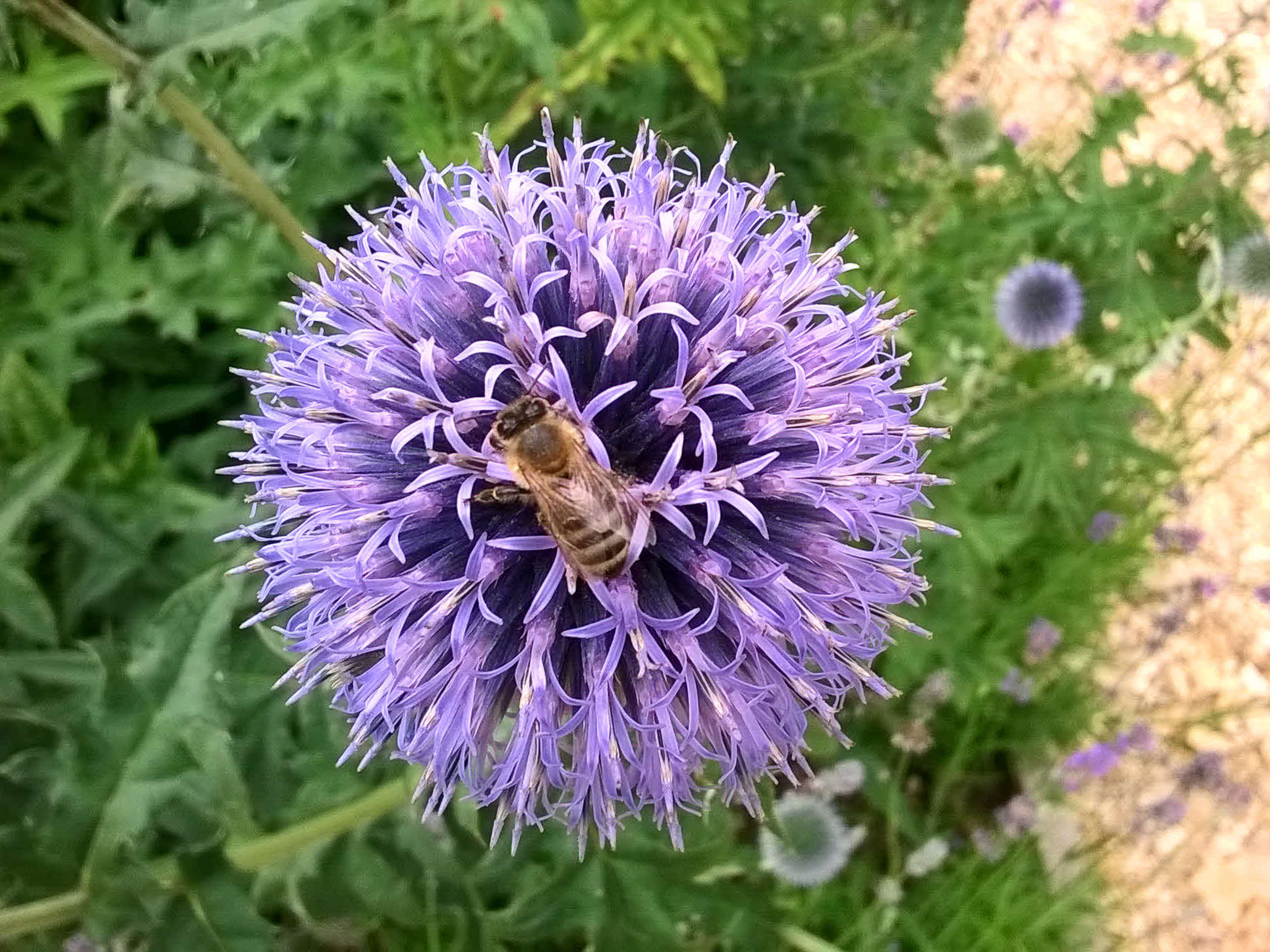 Bee friendly gardens gallery