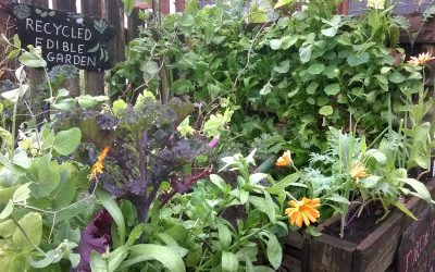 Easy 'Grow Your Own' Vegetables for Pots and Containers