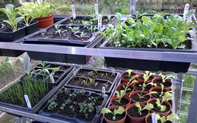 Seed sowing for homegrown vegetables