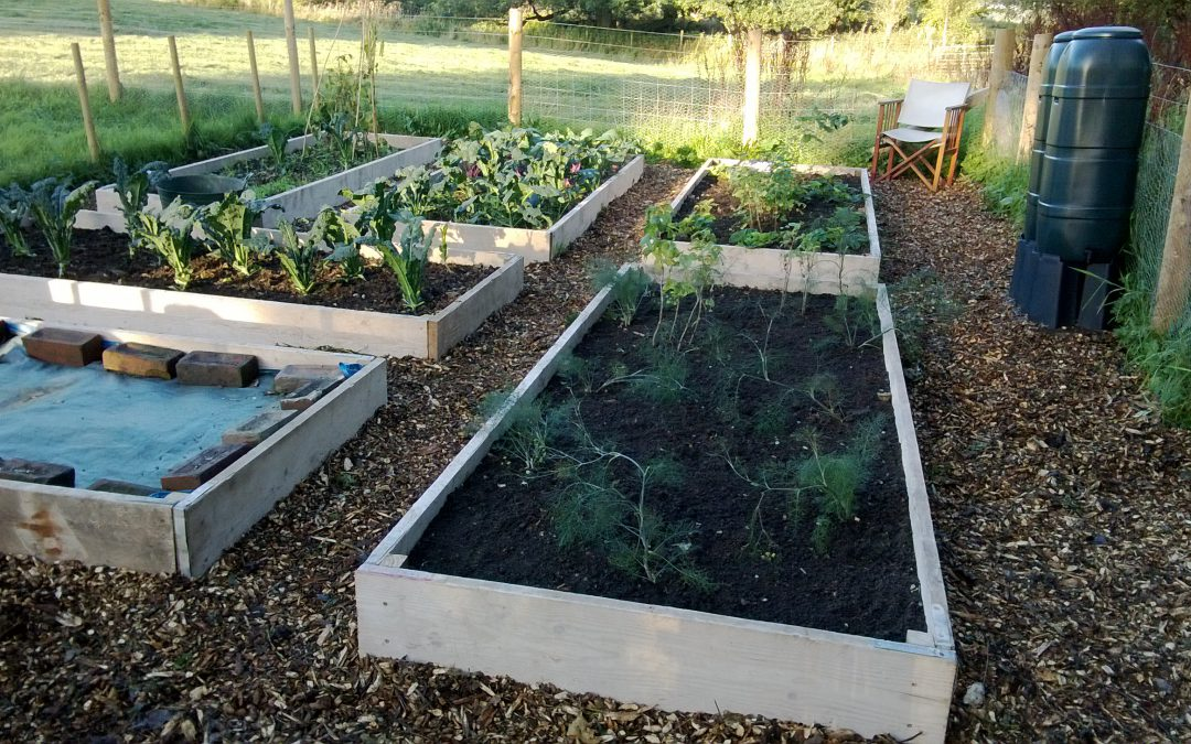 Raised Beds or Growing in the Ground?