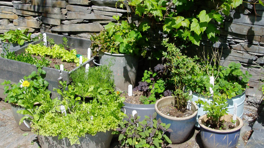 Herbs in recycled containers