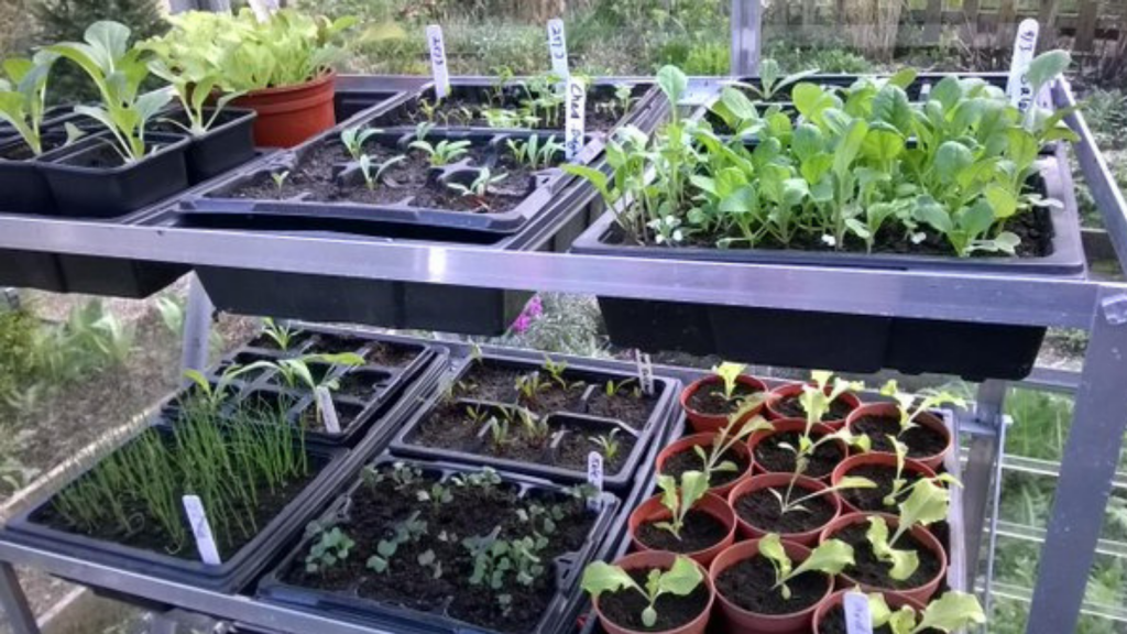 Vegetables Seedlings in Greenhouse