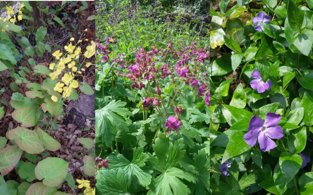 Groundcover plants in spring and summer
