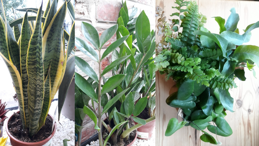 Houseplants for Shade